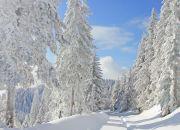 Verschneiter-Weg-im-Schwarzwald